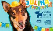 Festa Julina - Cachorro Perdido