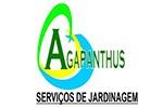 Agapanthus serviços de jardinagem