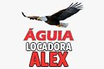 Águia Locadora - Alex