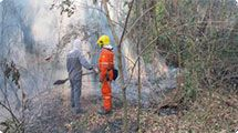 Defesa Civil apaga incêndio em mata em diversos pontos da cidade