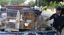Guarda realiza apreensão de pássaros silvestres no Jardim Monte Verde